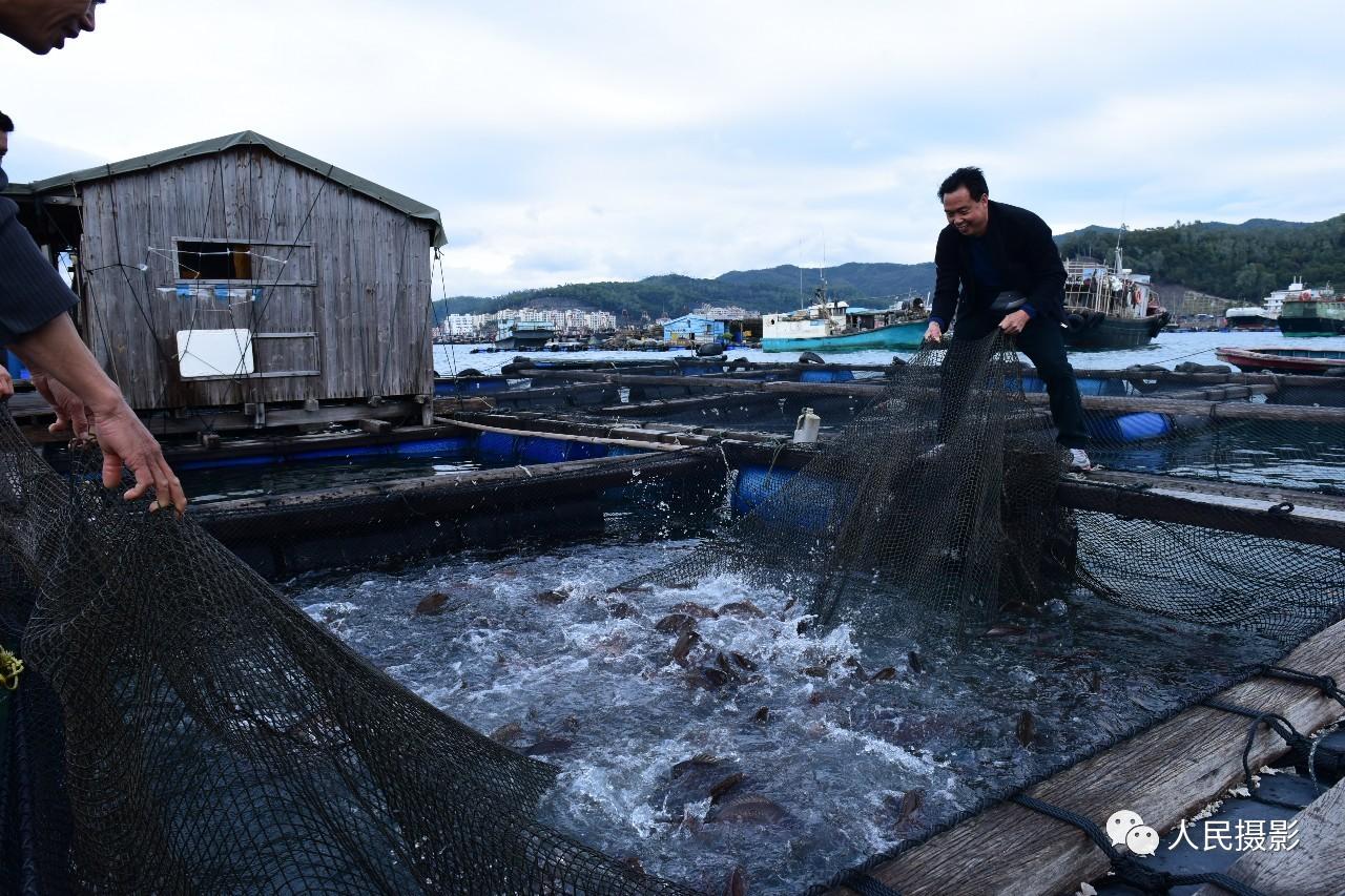 2015年1月13日,南澳海域,陈色通在拉网收鱼,这是当地最大的渔民,在海上有近千亩渔场